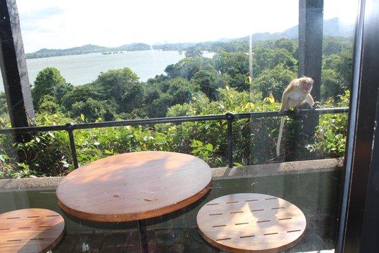 Heritance Kandalama: Balcony #Monkeys
