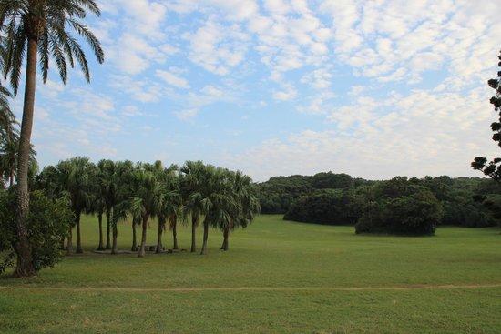 Eluanbi : 広い芝生やヤシの木