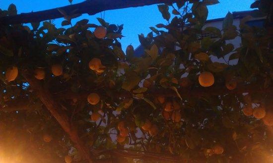 Pizzeria Donna Stella: Il limoneto sopra di noi