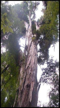 Pohangina, Nueva Zelanda: Totora Reserve