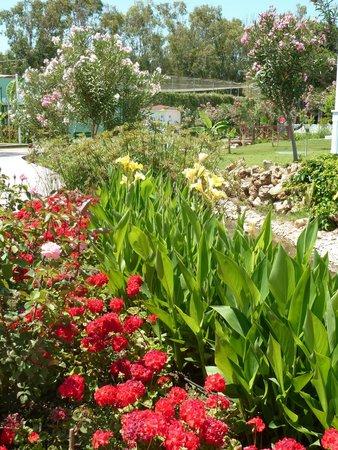 SENTIDO Letoonia Golf Resort: Les jardins : que de fleurs !
