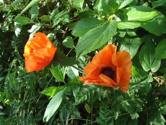 Jardin foto di la maison aux fleurs hernicourt for Jardin aux fleurs