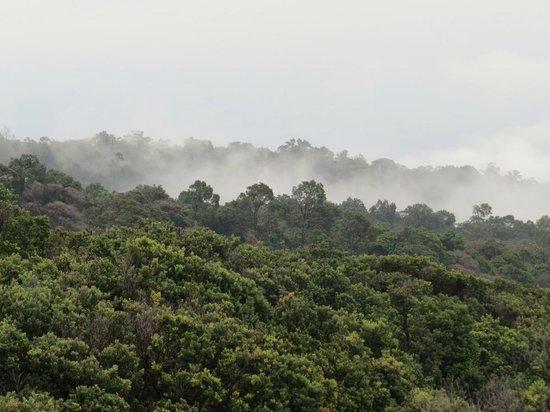 Lembang, Indonesia: pemandangan hutan gunung tangkuban perahu