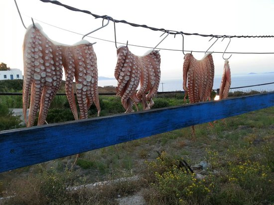 Mimis: Polpi essiccati al sole (prima)... octopus grilled (dopo)