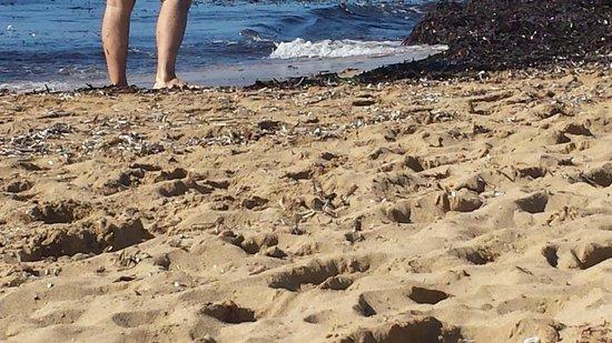 Arina Sand Resort : Beach was not clean