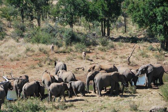 Royal Madikwe Luxury Safari Lodge : Afternoon drinks