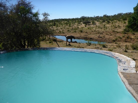 Royal Madikwe Luxury Safari Lodge : Not a bad view from the pool