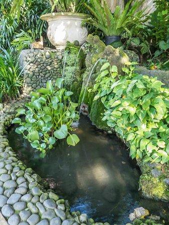 Samhita Garden: fuente del jardin