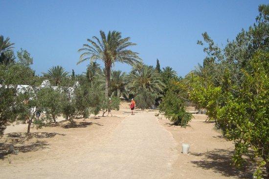 Club Jumbo Djerba: alentour hotel