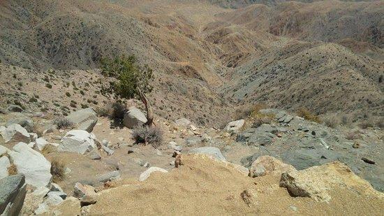 Joshua Tree National Park: Saan Andreas Fault