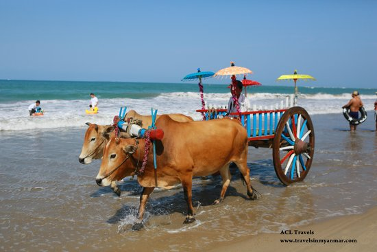 ACL Travels : Day Tour in Yangon: Ox Cart at Chaung Tha Beach, Myanmar