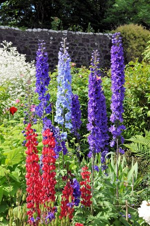 Dunvegan Castle & Gardens: flowers