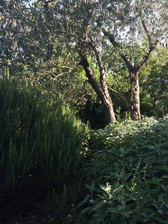 Villa Il Paradisino: Salviaa ja rosmariinia