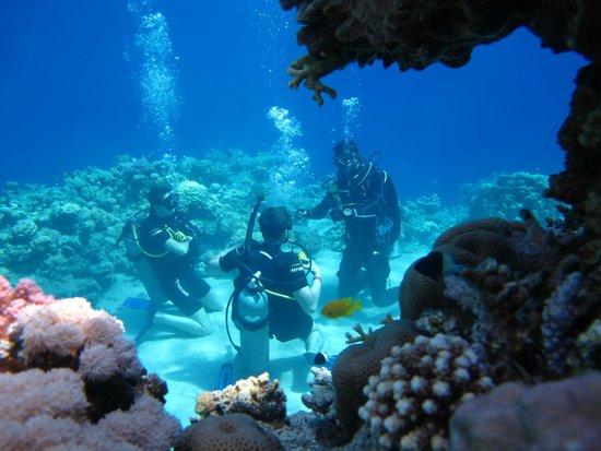 Tiran Island Hotel: Риф