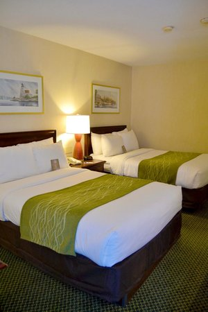 Comfort Inn Cape Cod: Updated guestrooms