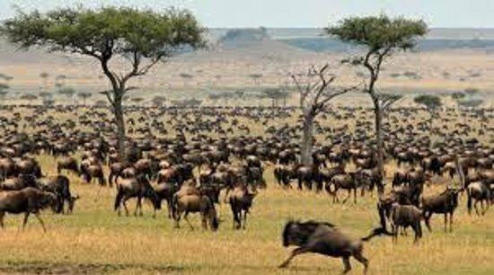 Serengeti Wildebeest Migration Picture Of Seronera Serengeti - 9 things to see and do in serengeti national park