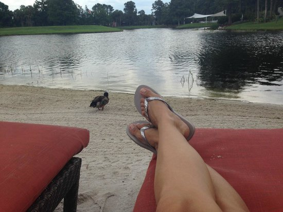 Hyatt Regency Orlando : Tranquilidade as margens do lago...