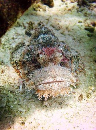 Neptune Scuba Diving: 石头鱼