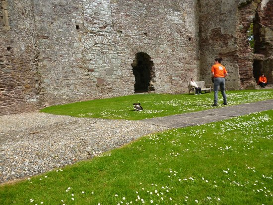 Laugharne Castle : The Birds