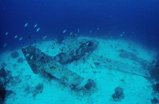 Turtle Bay Dive Resort: Copton Point
