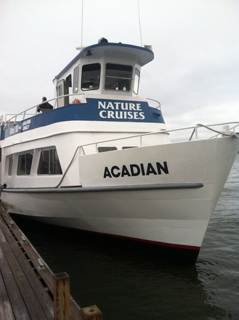 Acadian Nature Cruises: Boat