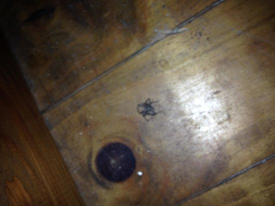 Origny-en-Thierache, France: Araignée dans chambre