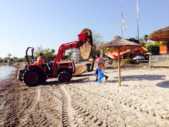 PortBlue Club Pollentia Resort & Spa : Une surprise pour les clients de la plage, la direction à décider de démonter les parasols et en