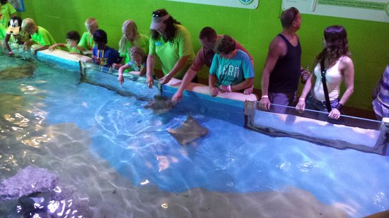 Clearwater Marine Aquarium : my husband & son touching sing rays. ...