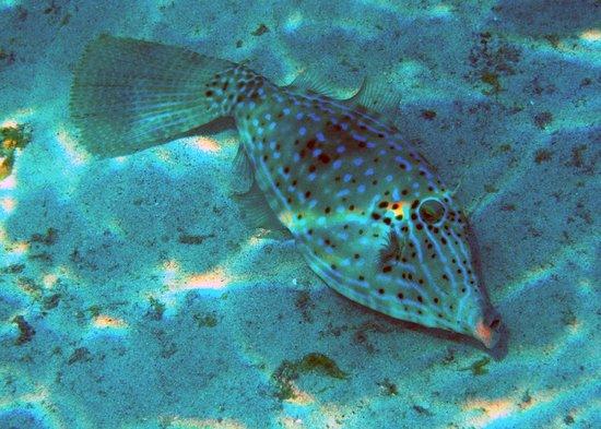 Trunk Bay: Interesting marine life