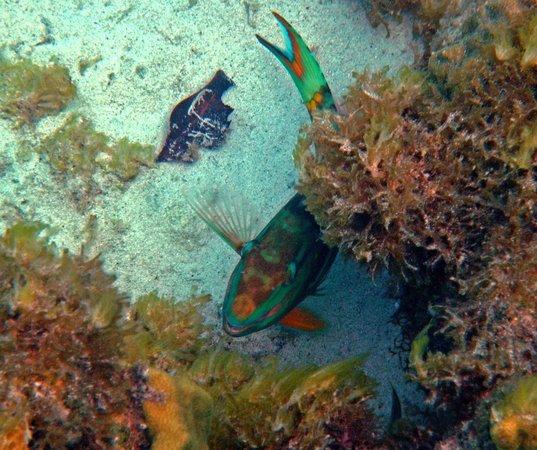 Trunk Bay: Fish