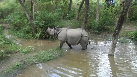 Breakfree Adventures - Private Day Tours : Rhino during elephant riding (If you're lucky!)