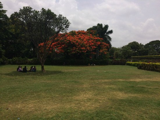 Gol Gumbaz: Flame tree in grounds