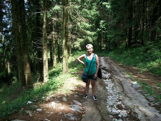 Monte Baldo: il bosco