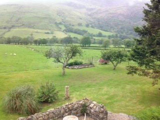 Dolffanog Fawr: Back garden