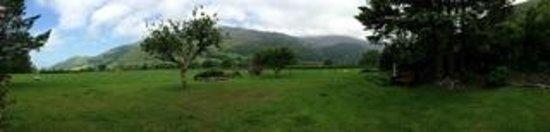Dolffanog Fawr: back garden view