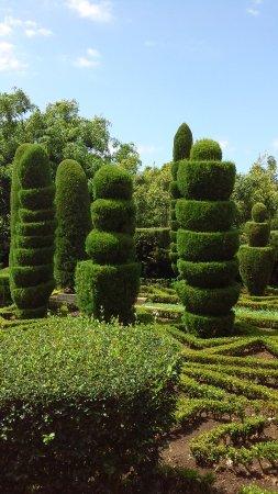 Madeira Botanical Garden : les coniferes