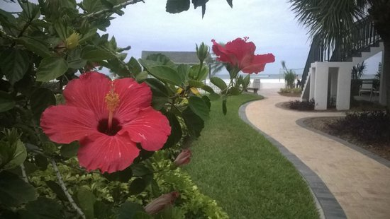 Bay Palms Waterfront Resort - Hotel and Marina: View Beach area
