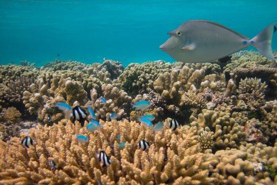 Club Med Kani : 足が届くところでもこんなにキレイな珊瑚と魚たち