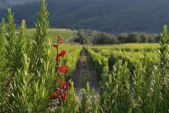 Antico Casale L'Impostino: Jardín y viñedos