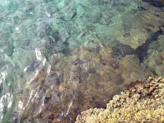 Arabia Azur Resort : Коралл