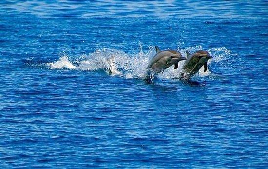 Travel Lodge Maldives: dolphing