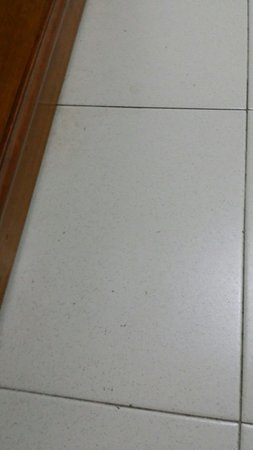 Nipah Bay Villa: Alot ants on the floor !