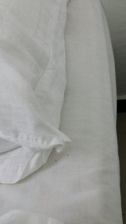 Nipah Bay Villa: Ants on bedsheet