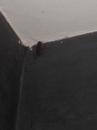 Hotel El Ejecutivo: Cucaracha en la regadera del baño de la habitación