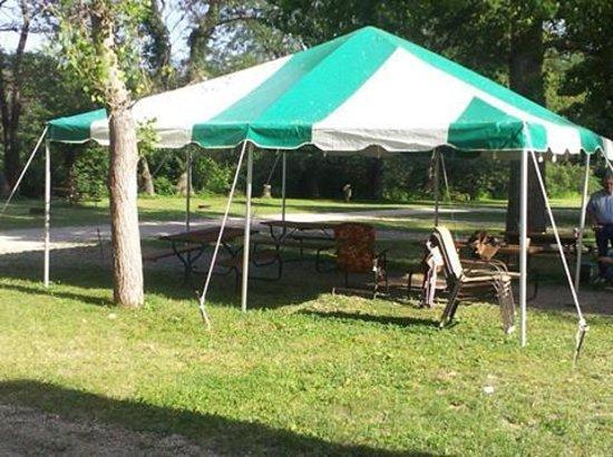Springfield Koa: canopy