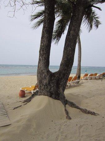Iberostar Costa Dorada : Strand