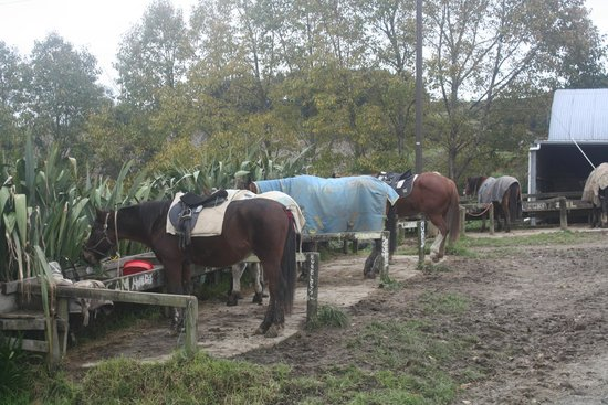 Horse Riding Warkworth : Another photos of the horses resting...