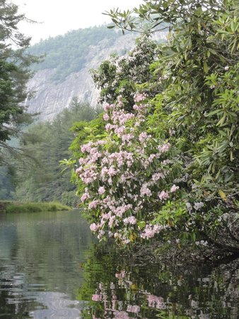 High Hampton Inn & Country Club: Mountain Laurel along Hampton Lake