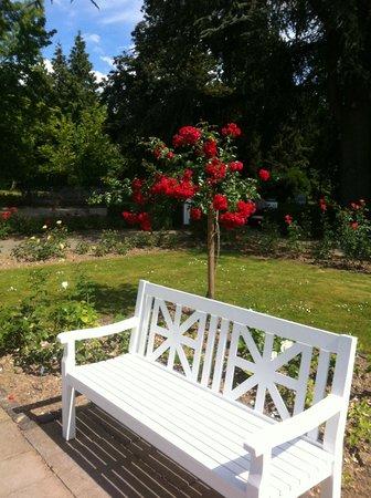 Palmengarten: Rose Garden