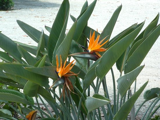 Shell Island Beach Club : Bird of paradise